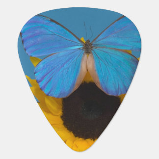 Sammamish Washington Photograph of Butterfly 57 Plectrum