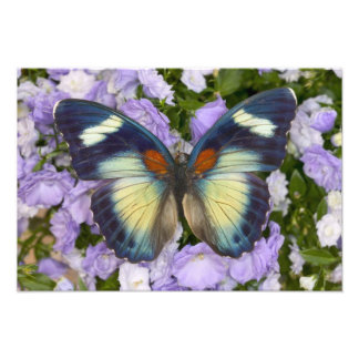 Sammamish Washington Photograph of Butterfly 5