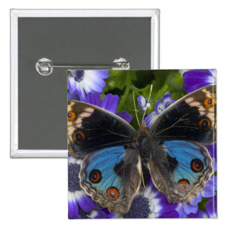 Sammamish Washington Photograph of Butterfly 9 15 Cm Square Badge