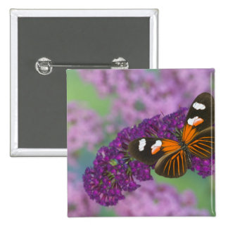 Sammamish Washington Photograph of Butterfly on 10 15 Cm Square Badge