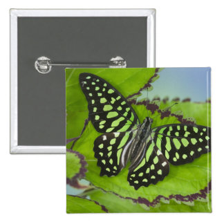 Sammamish Washington Photograph of Butterfly on 11 15 Cm Square Badge