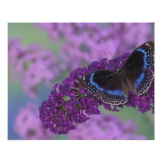 Sammamish Washington Photograph of Butterfly on 12 Poster