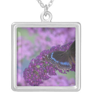 Sammamish Washington Photograph of Butterfly on 12 Square Pendant Necklace