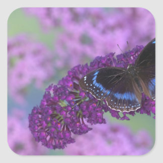 Sammamish Washington Photograph of Butterfly on 12 Square Sticker