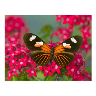 Sammamish Washington Photograph of Butterfly on 14 Postcard