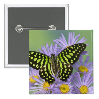 Sammamish Washington Photograph of Butterfly on 16 15 Cm Square Badge