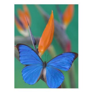 Sammamish Washington Photograph of Butterfly on 2 Postcard