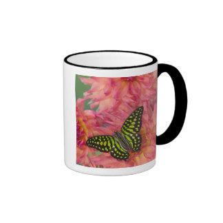 Sammamish Washington Photograph of Butterfly on 3 Ringer Mug