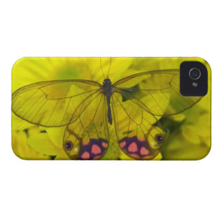 Sammamish Washington Photograph of Butterfly on 8 Case-Mate iPhone 4 Case