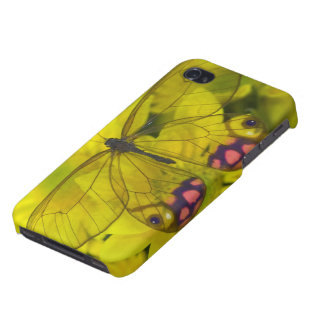 Sammamish Washington Photograph of Butterfly on 8 iPhone 4/4S Cover