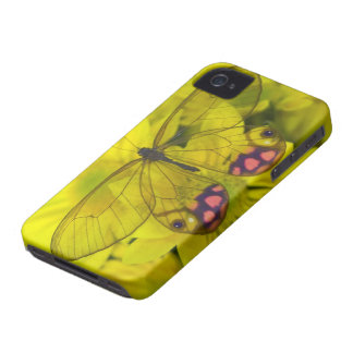 Sammamish Washington Photograph of Butterfly on 8 iPhone 4 Case-Mate Cases