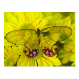 Sammamish Washington Photograph of Butterfly on 8 Postcard