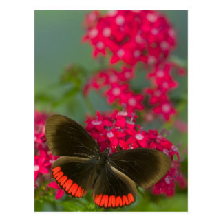 Sammamish Washington Photograph of Butterfly on Postcard