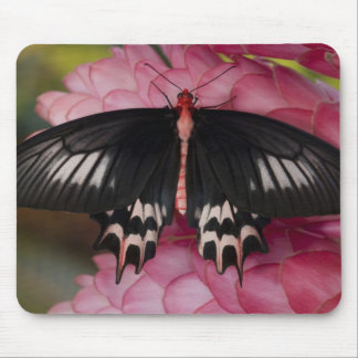 Sammamish, Washington. Tropical Butterflies 10 Mouse Pads