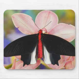 Sammamish, Washington. Tropical Butterflies 11 Mouse Pad