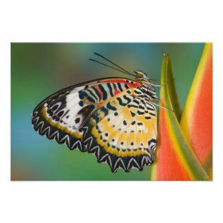 Sammamish, Washington. Tropical Butterflies 11 Art Photo