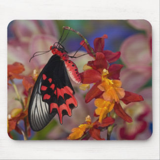 Sammamish, Washington. Tropical Butterflies 12 Mouse Pad