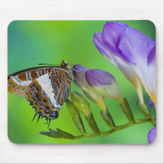 Sammamish, Washington. Tropical Butterflies 14 Mouse Pad