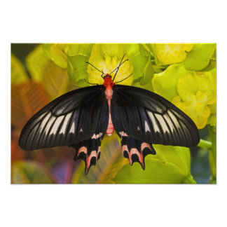 Sammamish, Washington. Tropical Butterflies 14 Photographic Print