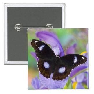 Sammamish Washington Tropical Butterflies 15 Cm Square Badge