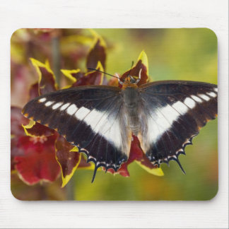 Sammamish, Washington. Tropical Butterflies 16 Mouse Pad