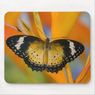 Sammamish, Washington. Tropical Butterflies 18 Mouse Pad