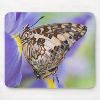 Sammamish, Washington. Tropical Butterflies 22 Mousepads
