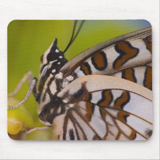Sammamish, Washington. Tropical Butterflies 23 Mousepad