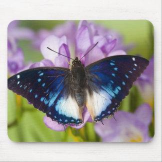 Sammamish, Washington. Tropical Butterflies 26 Mouse Pad