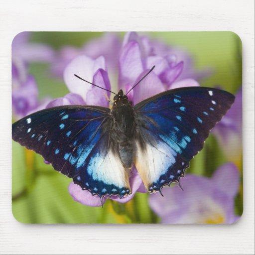 Sammamish, Washington. Tropical Butterflies 26 Mouse Pads