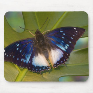 Sammamish, Washington. Tropical Butterflies 28 Mousepads