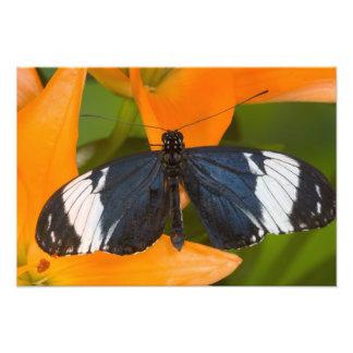 Sammamish, Washington. Tropical Butterflies 28 Photo