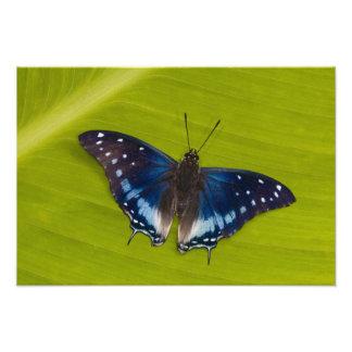 Sammamish, Washington. Tropical Butterflies 28 Photographic Print
