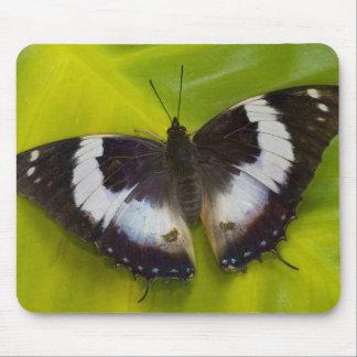 Sammamish, Washington. Tropical Butterflies 29 Mousepad