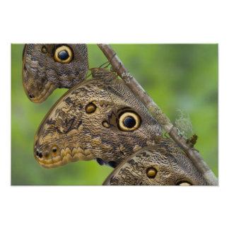 Sammamish, Washington. Tropical Butterflies 29 Photo