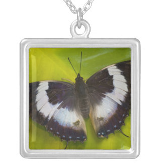 Sammamish, Washington. Tropical Butterflies 29 Square Pendant Necklace