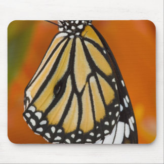 Sammamish, Washington. Tropical Butterflies 2 Mouse Pad