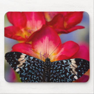 Sammamish Washington Tropical Butterflies 2 Mouse Pad