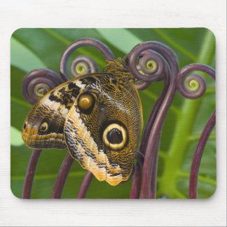 Sammamish, Washington. Tropical Butterflies 31 Mousepad