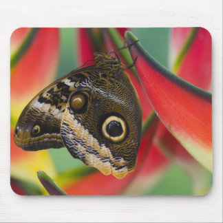 Sammamish, Washington. Tropical Butterflies 32 Mouse Pad