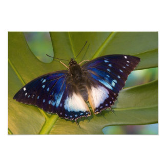 Sammamish, Washington. Tropical Butterflies 32 Photo Print