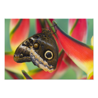 Sammamish, Washington. Tropical Butterflies 36 Photo