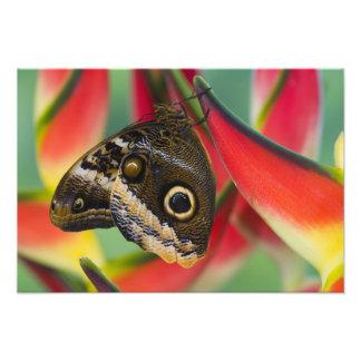Sammamish, Washington. Tropical Butterflies 36 Photo Art