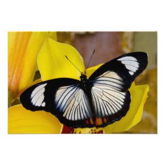 Sammamish, Washington. Tropical Butterflies 37 Photo