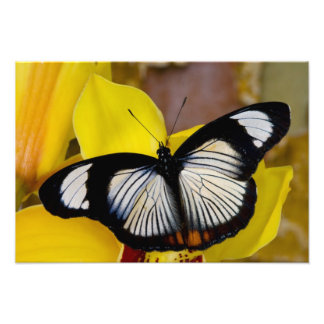 Sammamish, Washington. Tropical Butterflies 37 Photo Print