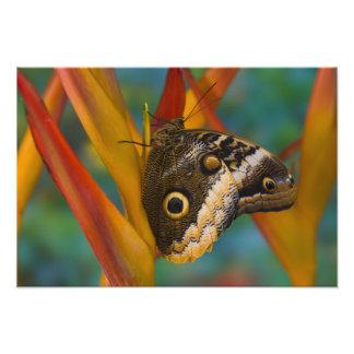 Sammamish, Washington. Tropical Butterflies 37 Photo Art