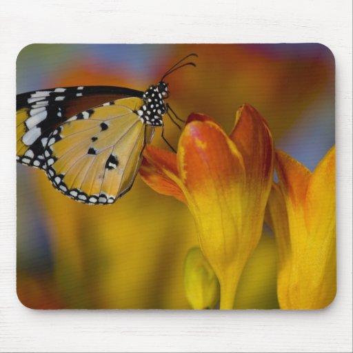 Sammamish, Washington. Tropical Butterflies 39 Mousepads