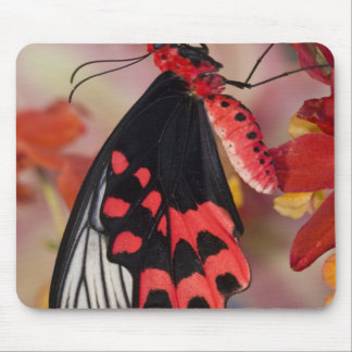 Sammamish, Washington. Tropical Butterflies 3 Mouse Pads