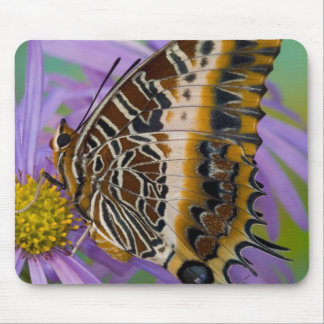 Sammamish Washington Tropical Butterflies 3 Mouse Pad