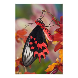 Sammamish, Washington. Tropical Butterflies 3 Photo Print